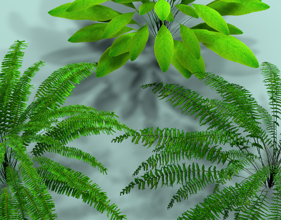 Plant Fer royalty-free 3d model - Preview no. 6