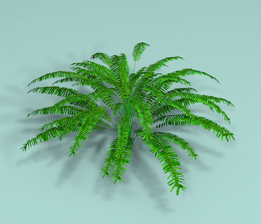 Plant Fer royalty-free 3d model - Preview no. 2
