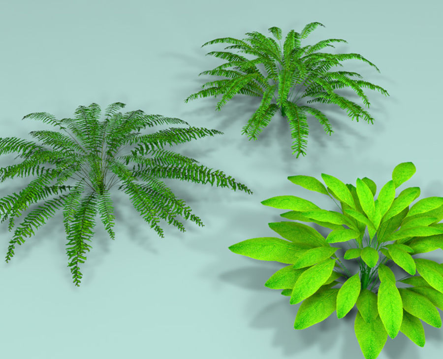 Plant Fer royalty-free 3d model - Preview no. 5