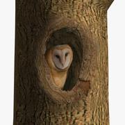 AB Owl Tree 3d model