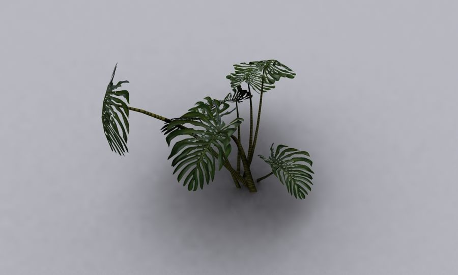 monstera royalty-free 3d model - Preview no. 3