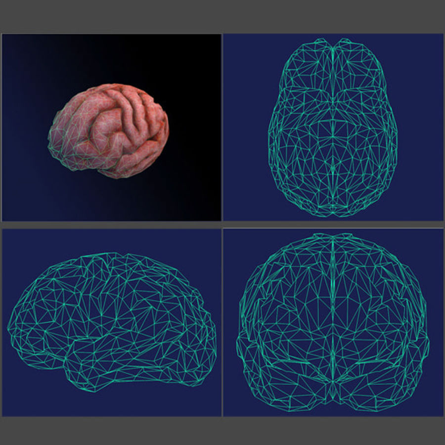 brain low poly royalty-free 3d model - Preview no. 7