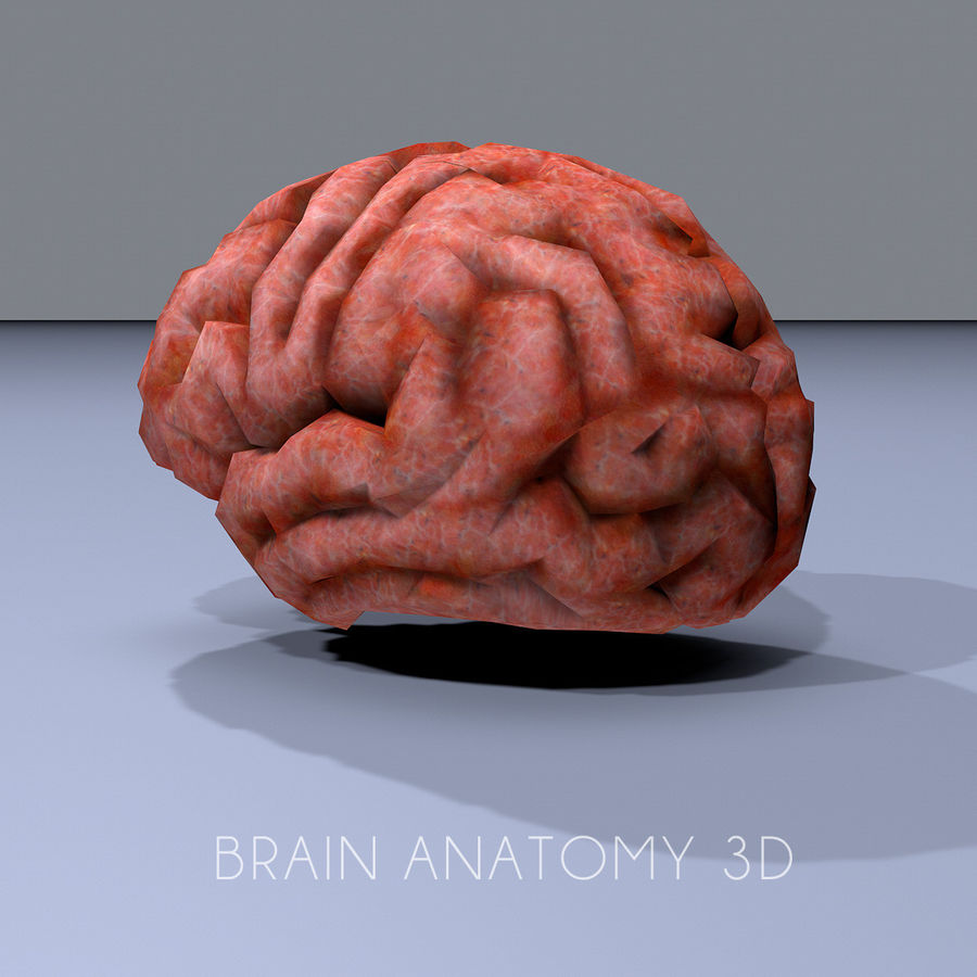 brain low poly royalty-free 3d model - Preview no. 4