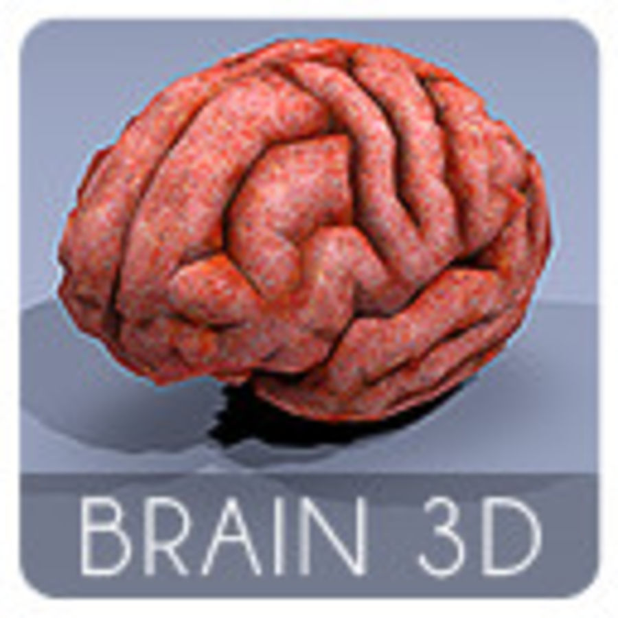 brain low poly royalty-free 3d model - Preview no. 8