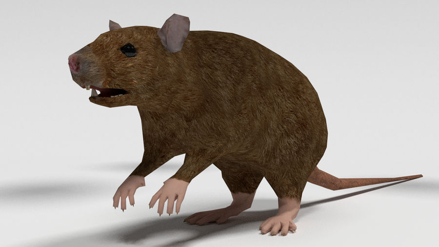 Low Poly Rat royalty-free 3d model - Preview no. 1