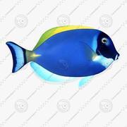 FG Tropical Fish 04 3d model