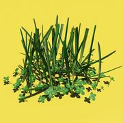 Grass & Clovers 3d model