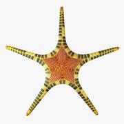 морская звезда 3d model