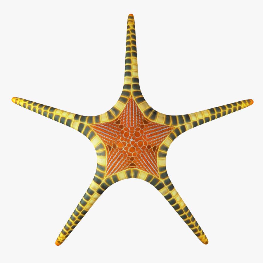 Starfish 3D Model $19 - .obj .max .fbx .dae .3ds - Free3D