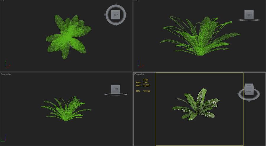 asplenium nidus nest fern royalty-free 3d model - Preview no. 7