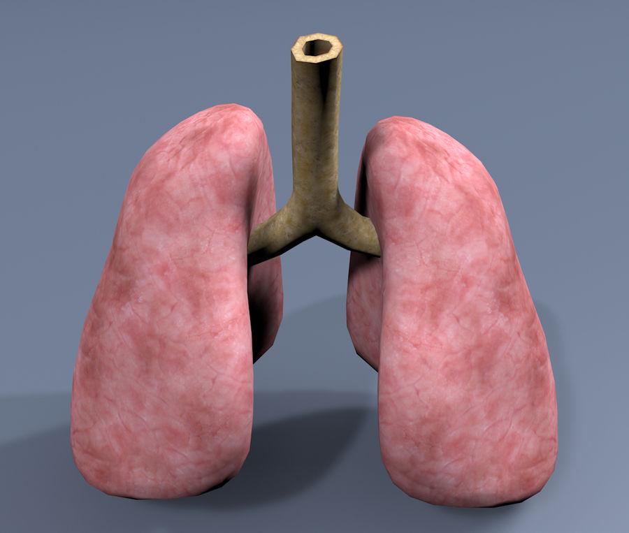 纹理肺 royalty-free 3d model - Preview no. 4