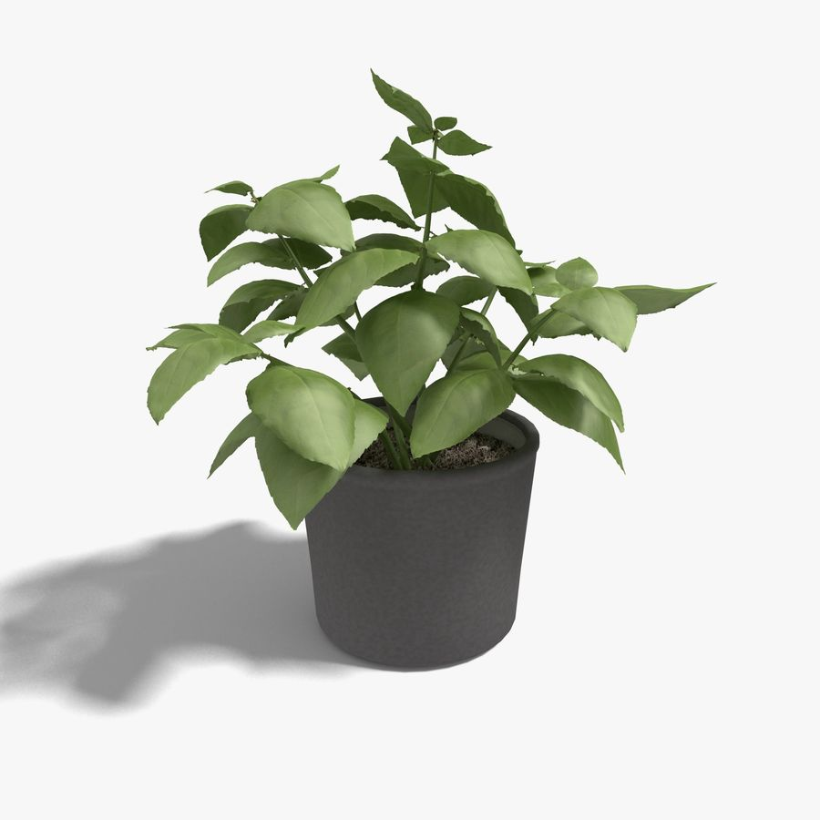 Plant in a pot royalty-free 3d model - Preview no. 1