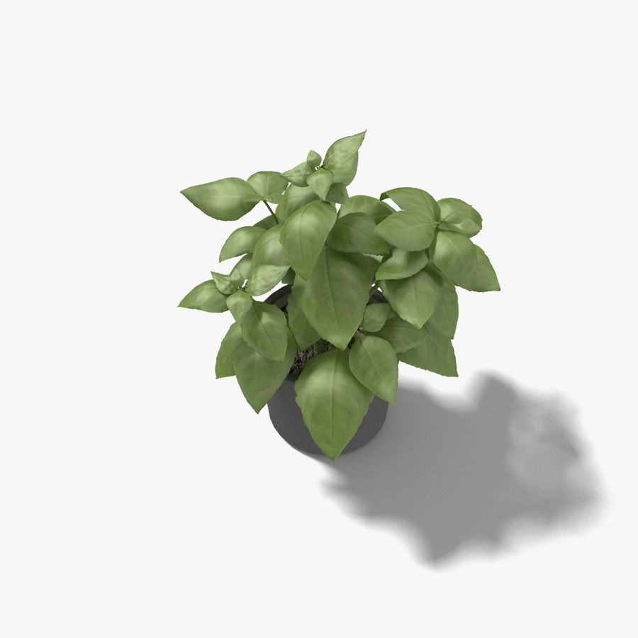 Plant in a pot royalty-free 3d model - Preview no. 3