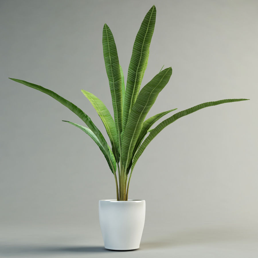musa palm royalty-free 3d model - Preview no. 2