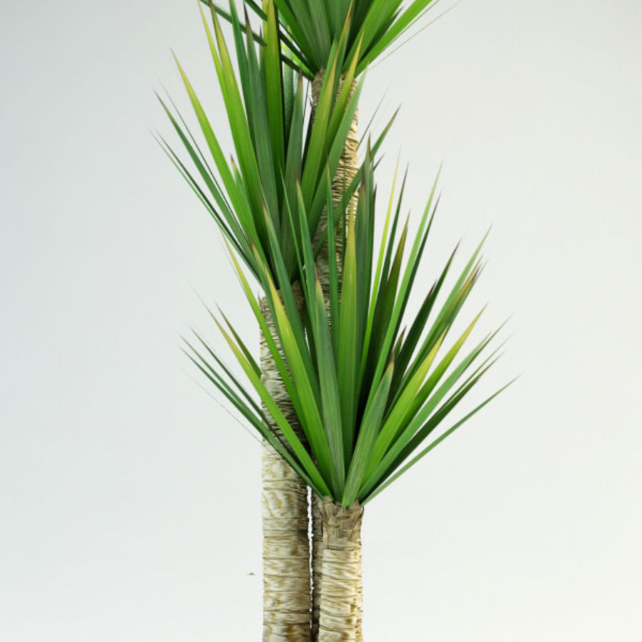 yucca Spanish dagger royalty-free 3d model - Preview no. 1