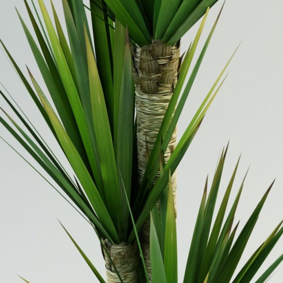 yucca Spanish dagger royalty-free 3d model - Preview no. 4