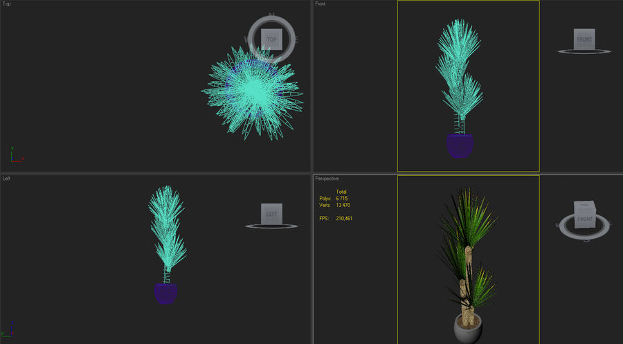 yucca Spanish dagger royalty-free 3d model - Preview no. 6