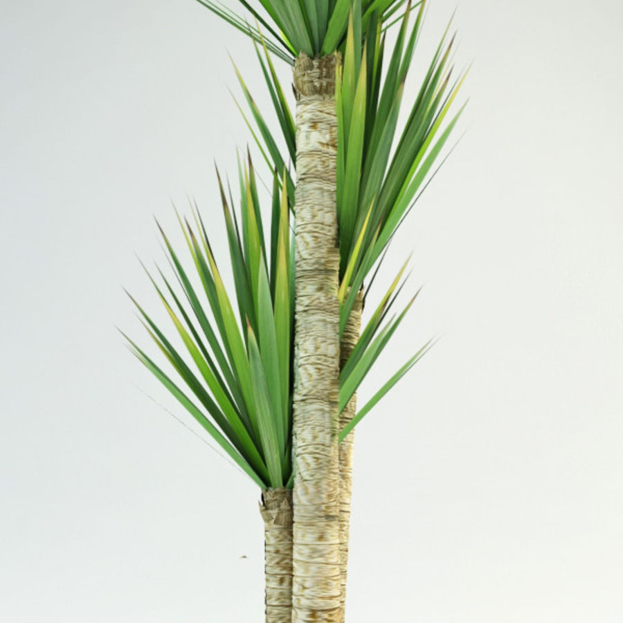yucca Spanish dagger royalty-free 3d model - Preview no. 2