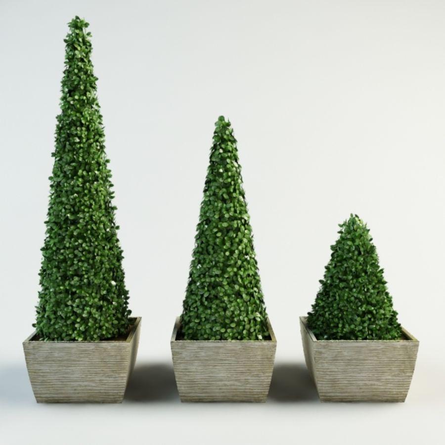 boxwood cone bush royalty-free 3d model - Preview no. 2