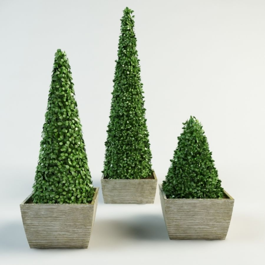 boxwood cone bush royalty-free 3d model - Preview no. 1