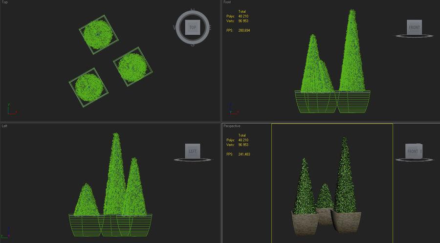 boxwood cone bush royalty-free 3d model - Preview no. 6
