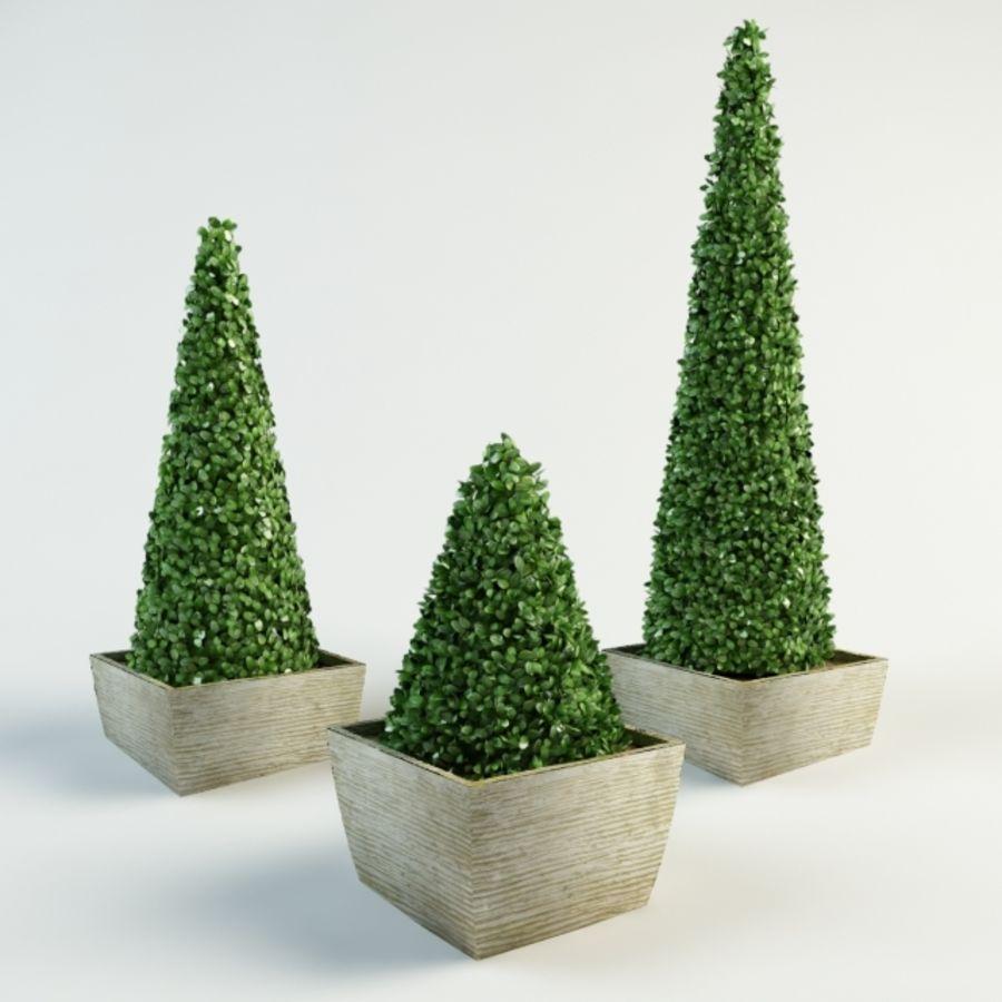 boxwood cone bush royalty-free 3d model - Preview no. 3