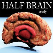 Halv hjärnstruktur texturerad 3d model