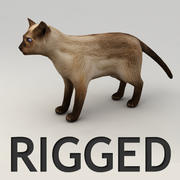 Siamese cat rigged model 3d model