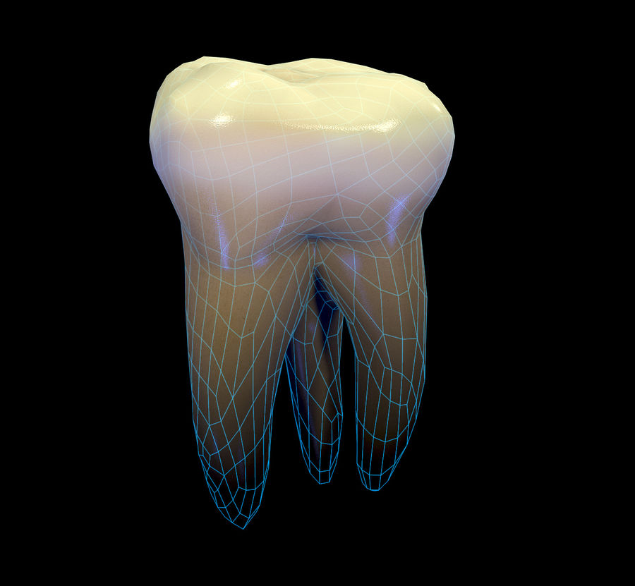Tänder andra övre molar royalty-free 3d model - Preview no. 3