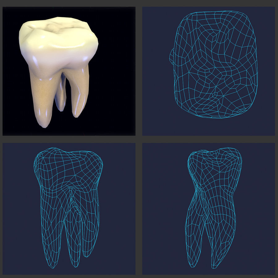 Tänder andra övre molar royalty-free 3d model - Preview no. 2