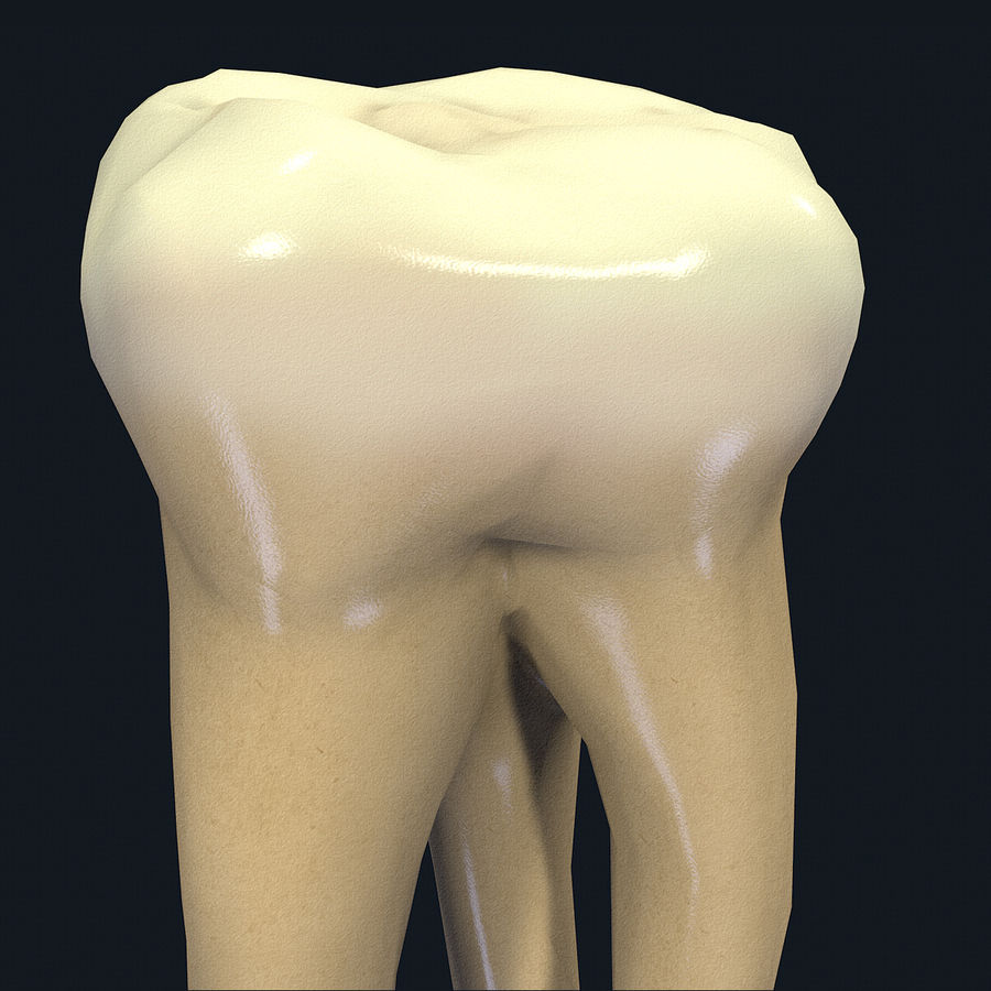 Tänder andra övre molar royalty-free 3d model - Preview no. 5