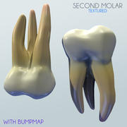 Ludzki Drugi Molar 3d model