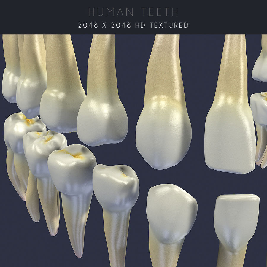 Human Teeth Textured royalty-free 3d model - Preview no. 7