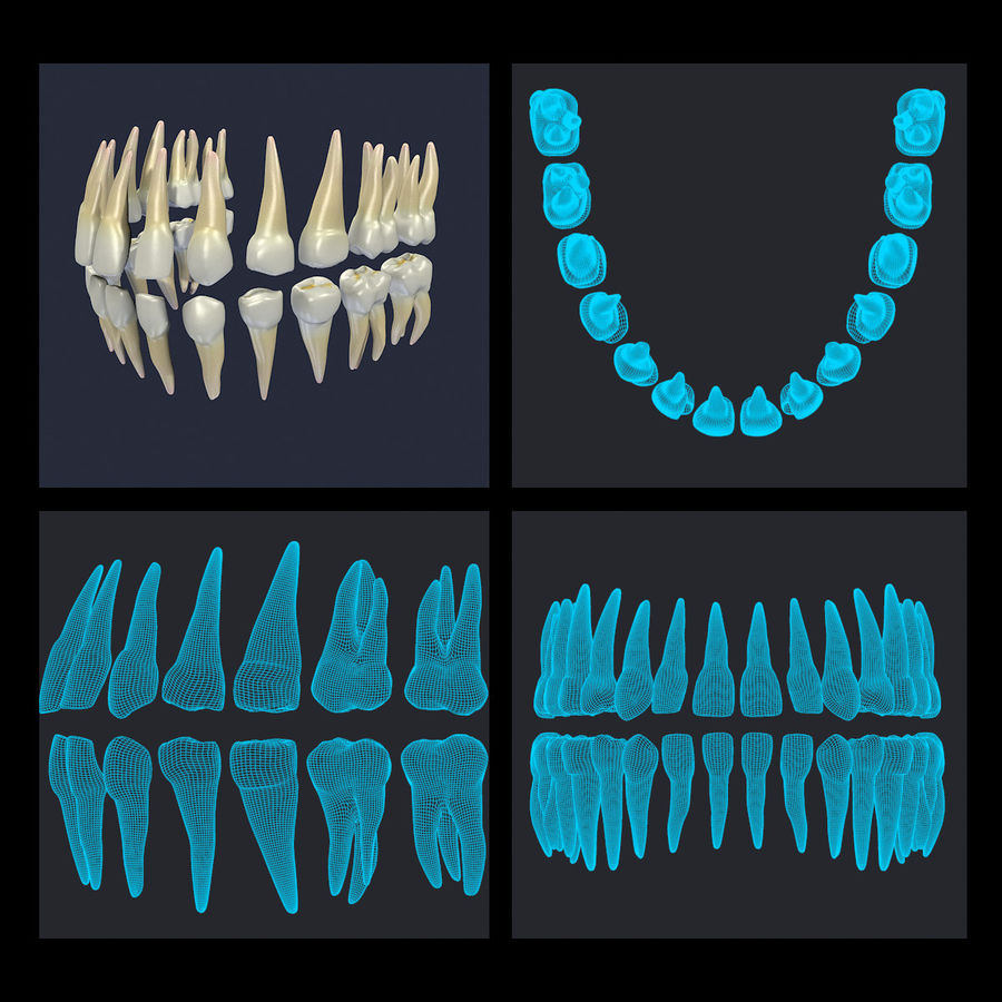 Human Teeth Textured royalty-free 3d model - Preview no. 16