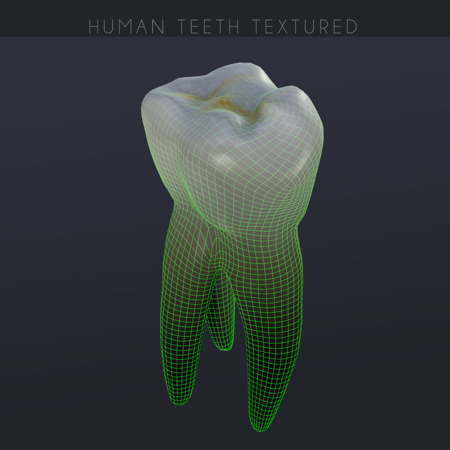 Human Teeth Textured royalty-free 3d model - Preview no. 11