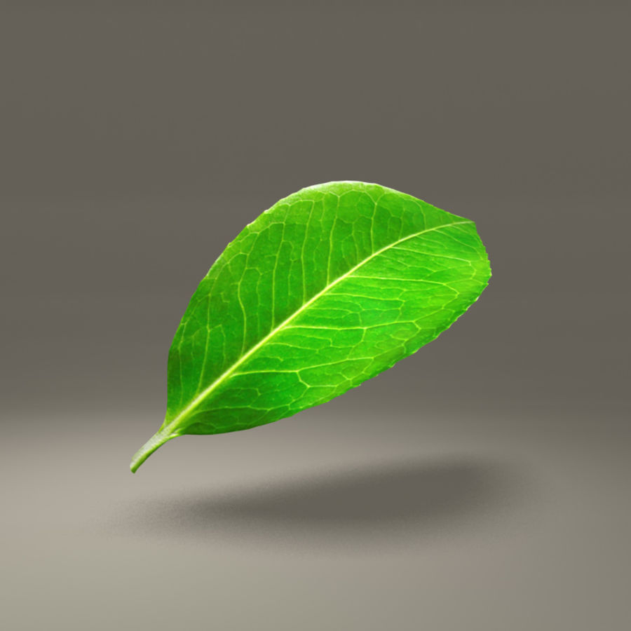 Green Leaf royalty-free 3d model - Preview no. 2
