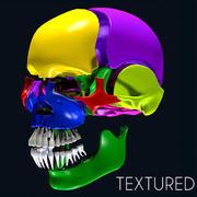 Части цвета анатомии черепа 3d model
