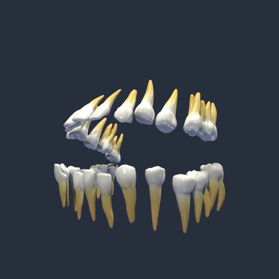 teeth molar royalty-free 3d model - Preview no. 3