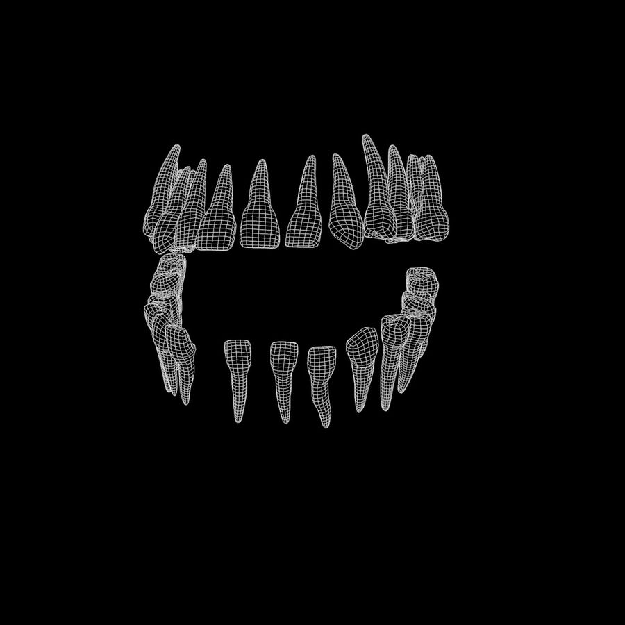 teeth molar royalty-free 3d model - Preview no. 5
