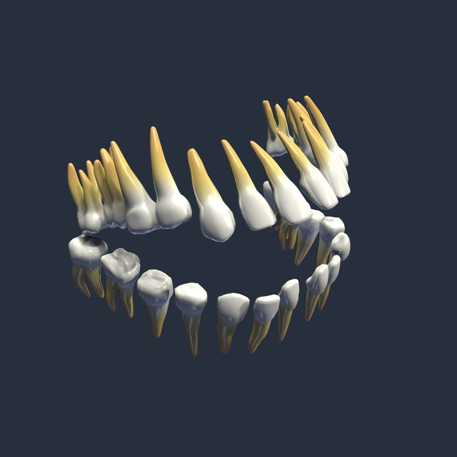 teeth molar royalty-free 3d model - Preview no. 1