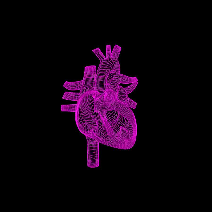 halft heart human royalty-free 3d model - Preview no. 4