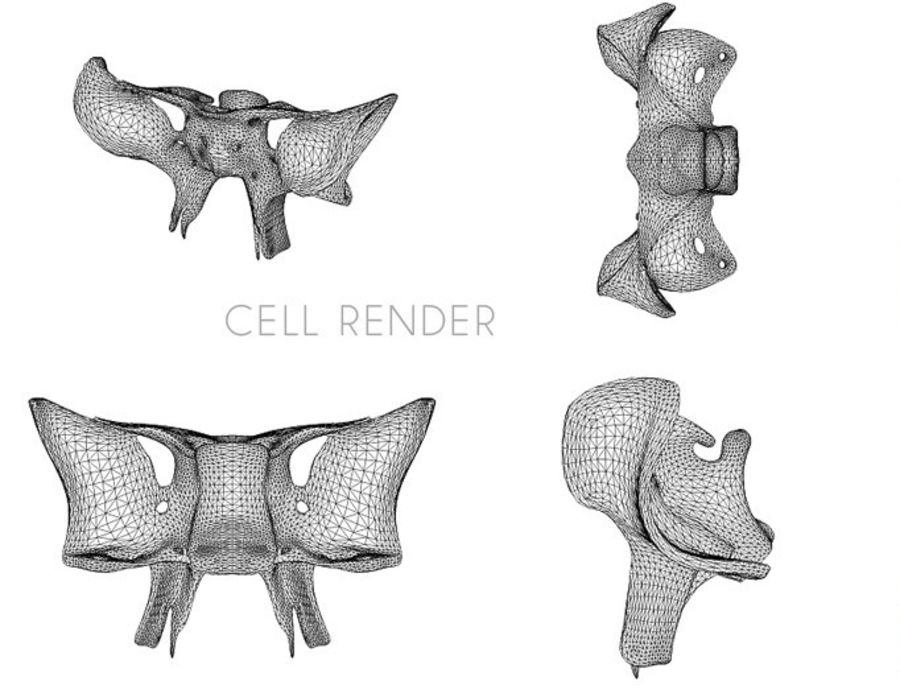 Anatomy Sphenoid Bone royalty-free 3d model - Preview no. 6