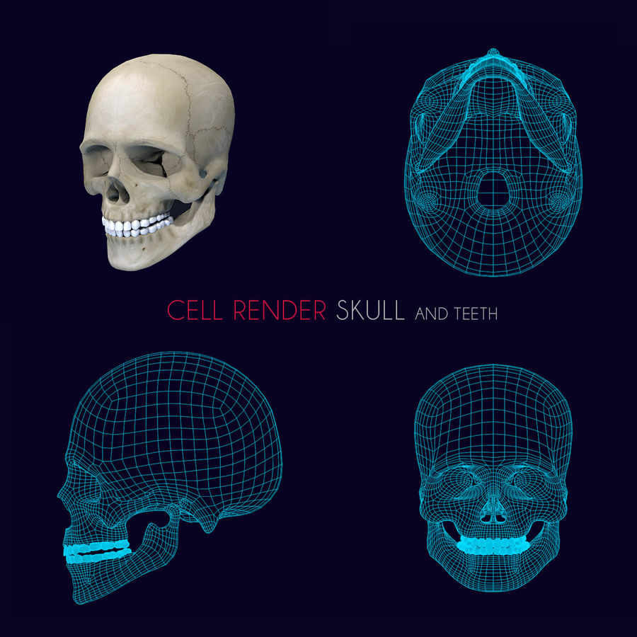 Human Skull Textured royalty-free 3d model - Preview no. 8