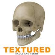 Human Skull Textured 3d model