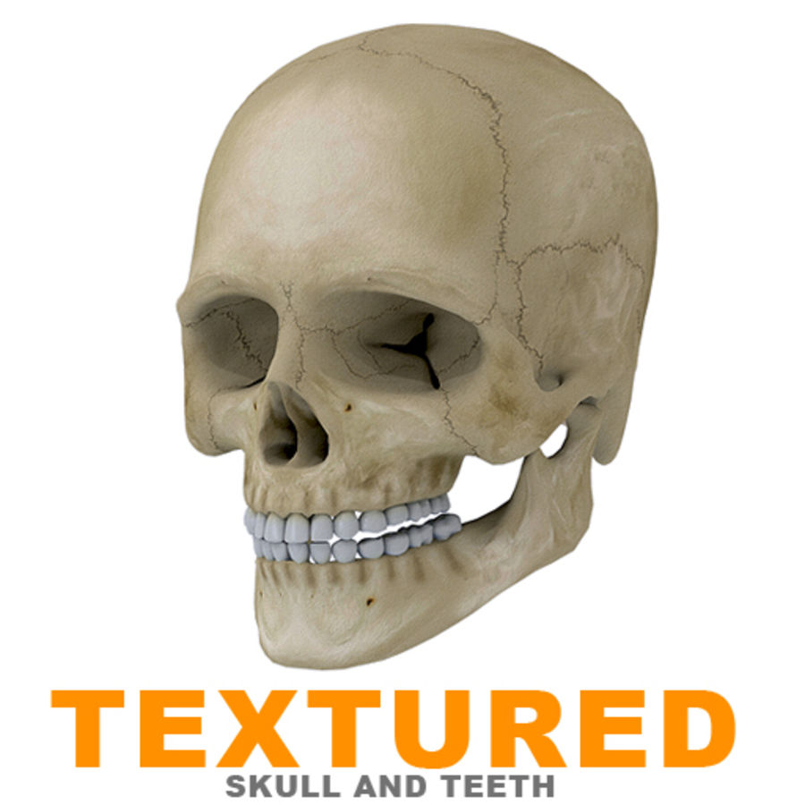 Human Skull Textured royalty-free 3d model - Preview no. 1