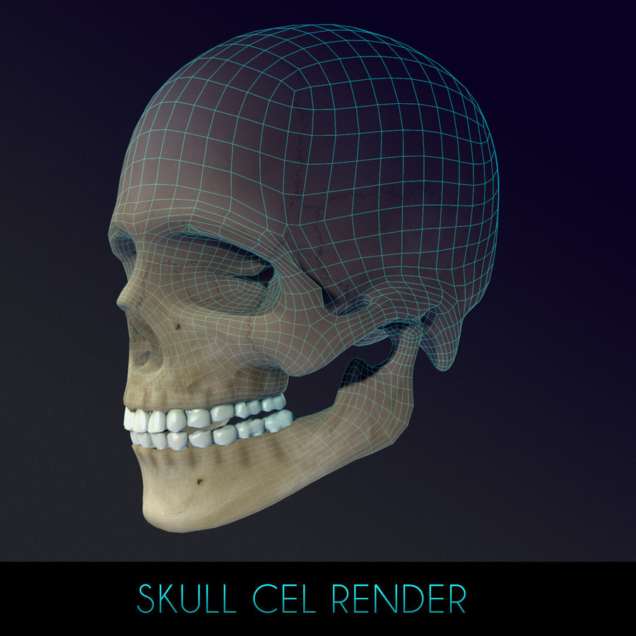 Human Skull Textured royalty-free 3d model - Preview no. 14