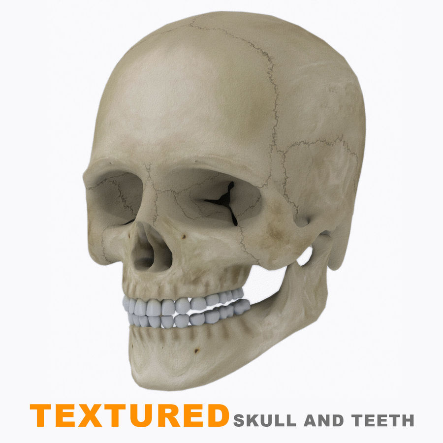 Human Skull Textured royalty-free 3d model - Preview no. 13