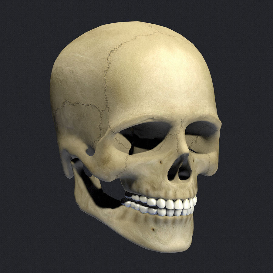 Human Skull Textured royalty-free 3d model - Preview no. 2