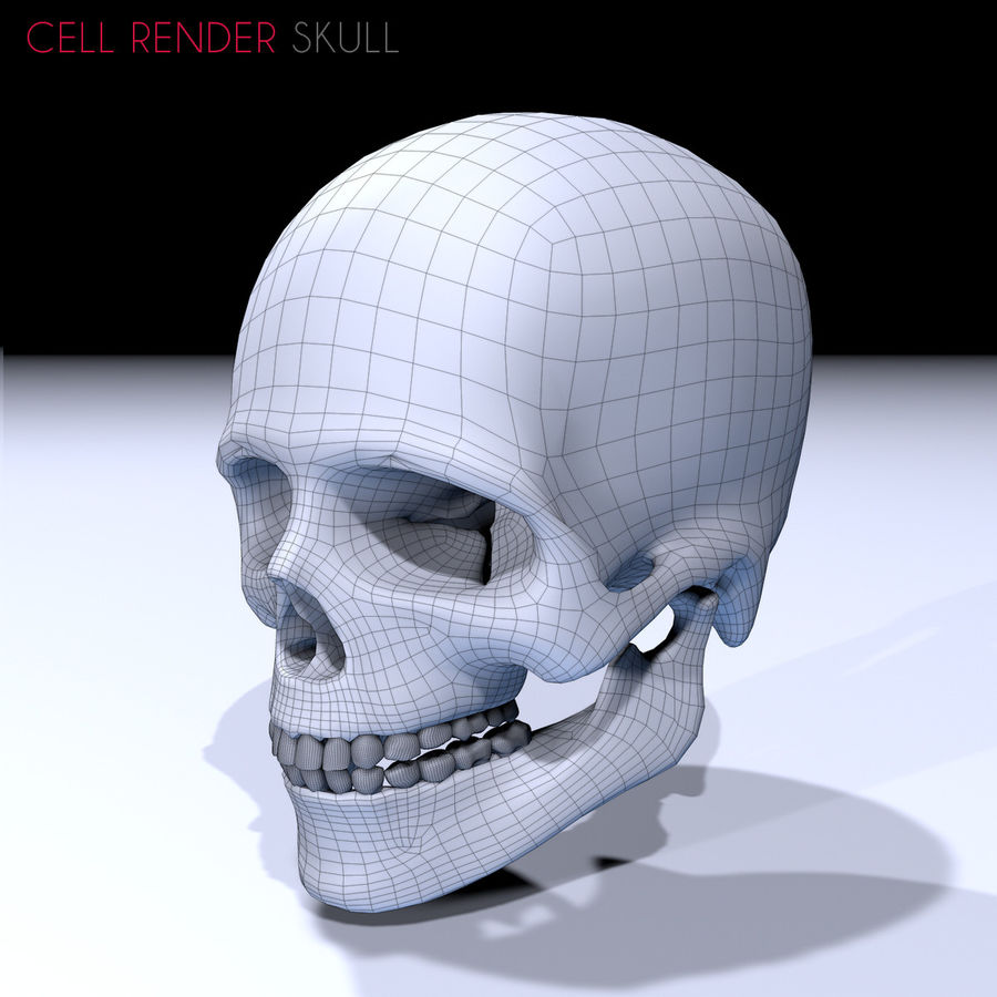 Human Skull Textured royalty-free 3d model - Preview no. 10