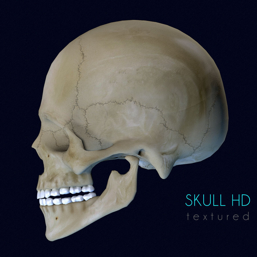Human Skull Textured royalty-free 3d model - Preview no. 4